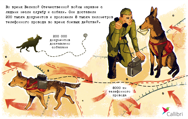Количество собак, которые несли службу наравне со связистами - инфографика Callibri